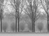 foto-maand-januari-winter_zwart-wit_bewerkt-1