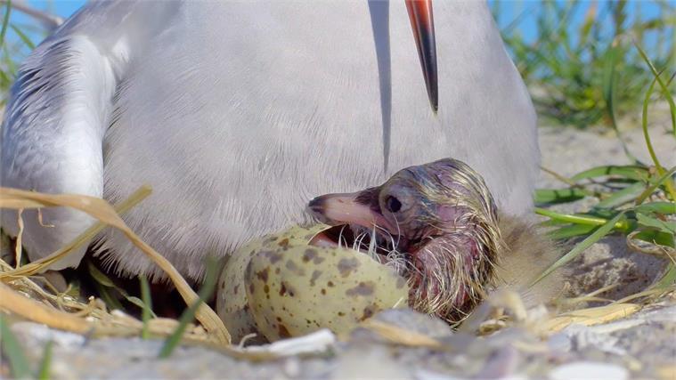 Visdief op nest